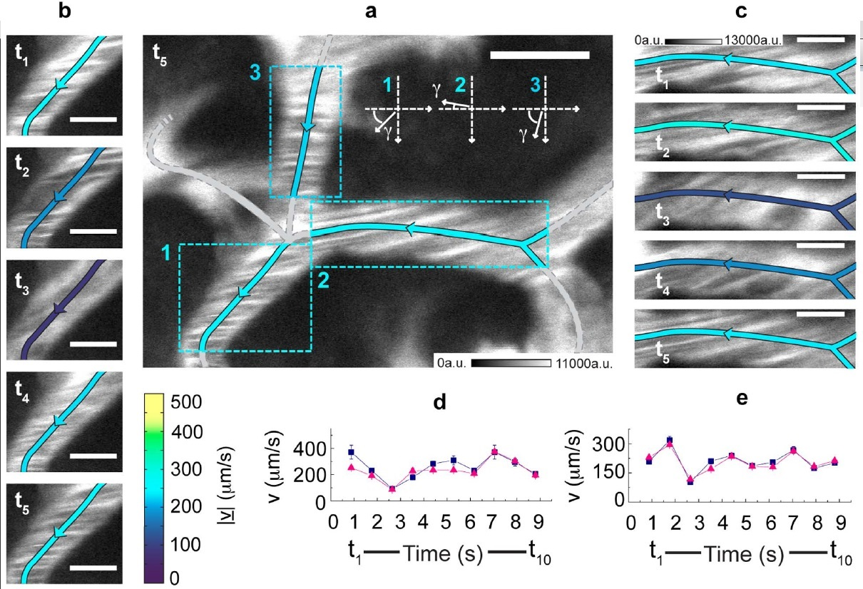 Flics: Flow Image Correlation Spectroscopy